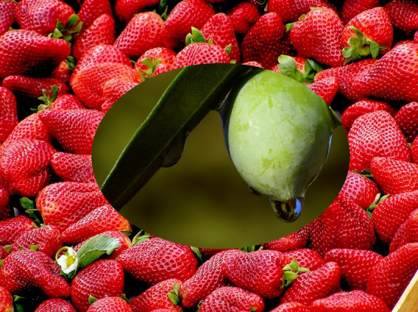 Olive unter Erdbeeren