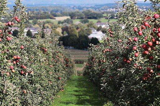 Der Apfel fällt wohl weit vom Stamm